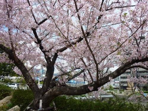 お花見 004_resized.jpg