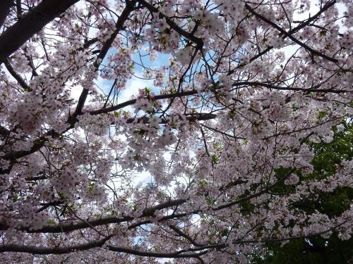 お花見 003_resized.jpg