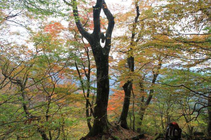 材木石付近の紅葉