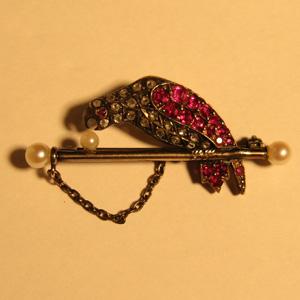 鸚鵡と真珠