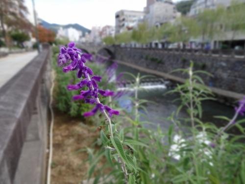 5花とめがね橋 (1200x900)