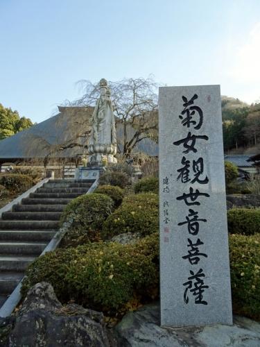 3菊女 (900x1200)