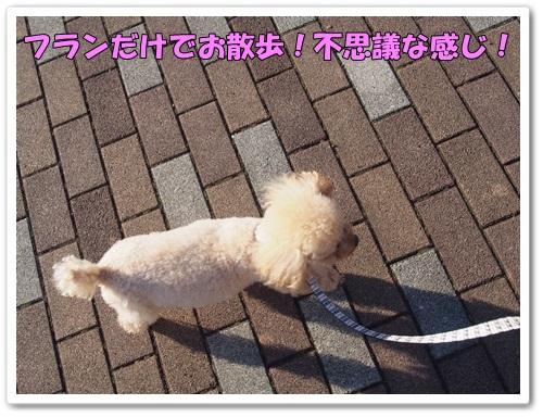 20131205_004_02.jpg