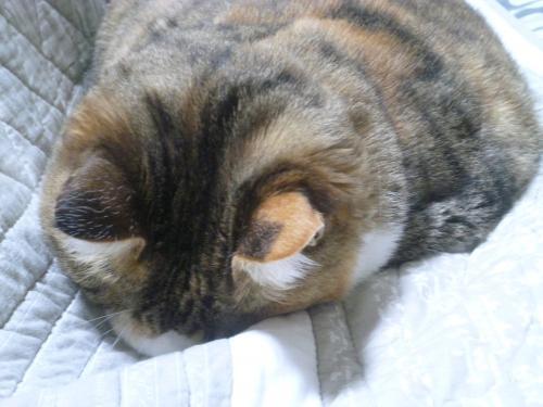 モコの寝姿 3