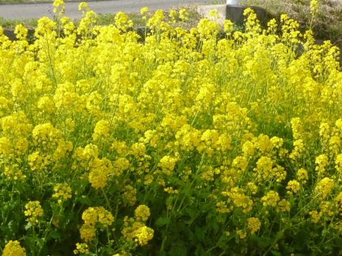 お寺の花 3