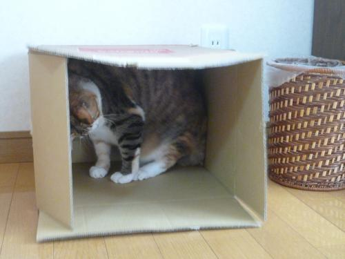 箱で遊ぼう 2