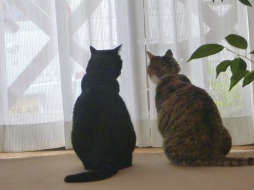 モコとカイ 5