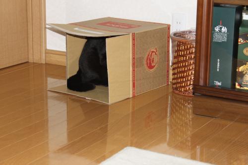 箱でボール遊び 1