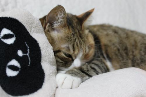 モコの寝顔 2