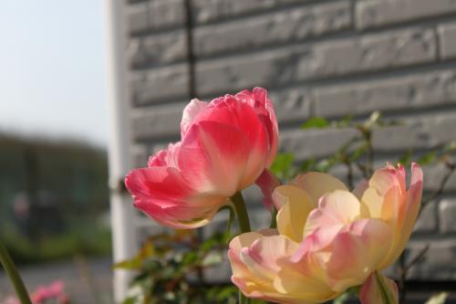 咲いたよ 4