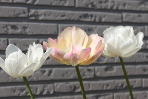 咲いたよ 3