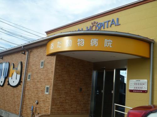 おだ動物病院 8