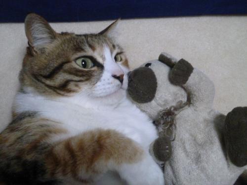モコとクマさん 4