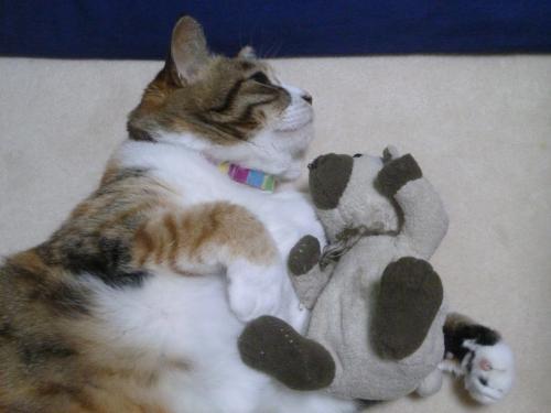 モコとクマさん 3