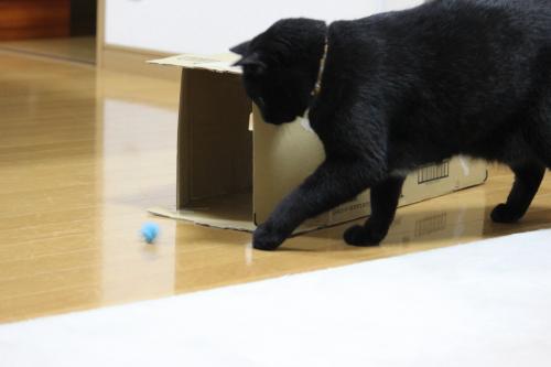 箱とボール 5