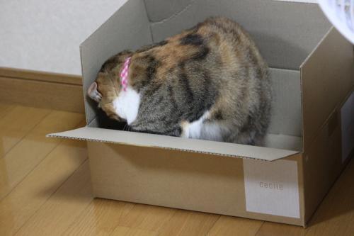 モコと箱 4