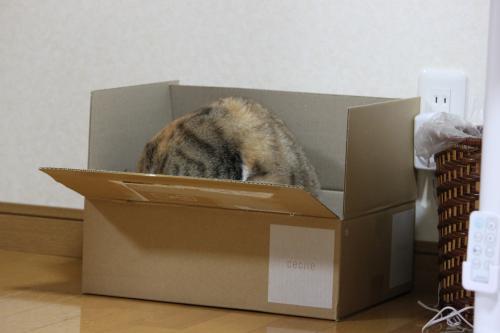 モコと箱 3
