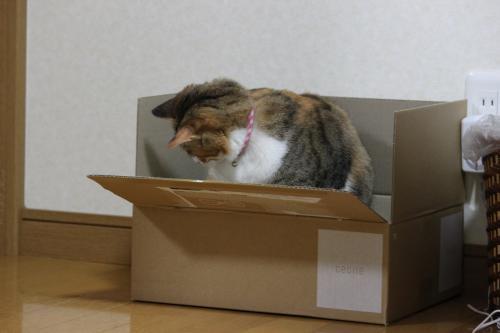 モコと箱 2
