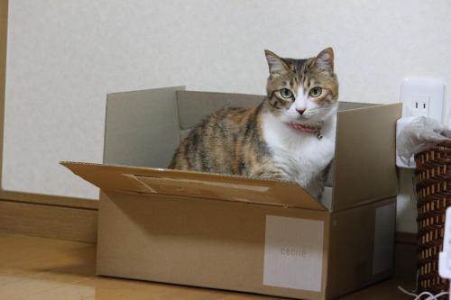 モコと箱 1