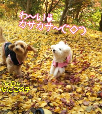 2013-12-03-10-41-19_decoA.jpg