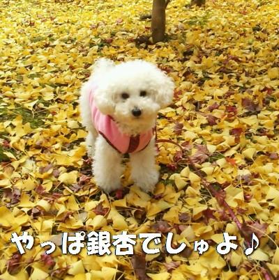 銀杏みゆA