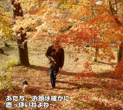 紅葉のじゅうたんB