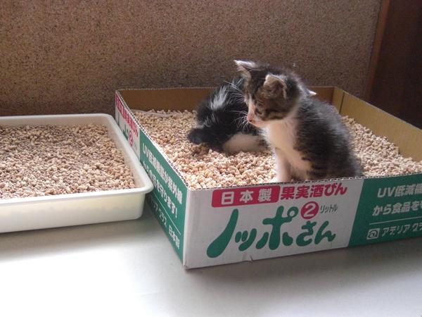 はるとニア 子猫時代06