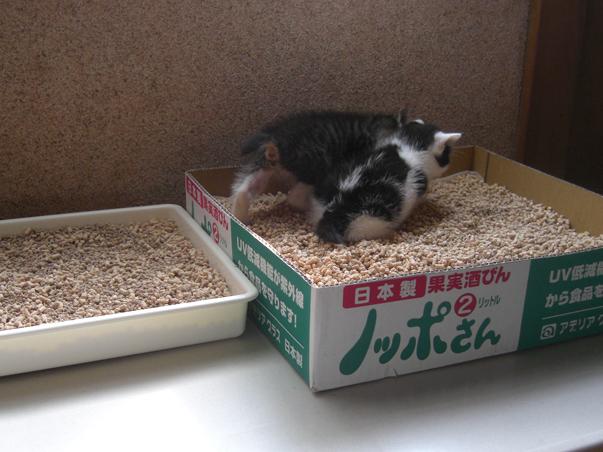 はるとニア 子猫時代05
