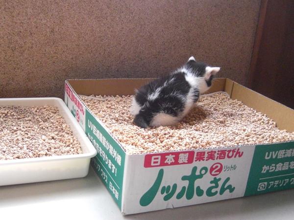 はるとニア 子猫時代04