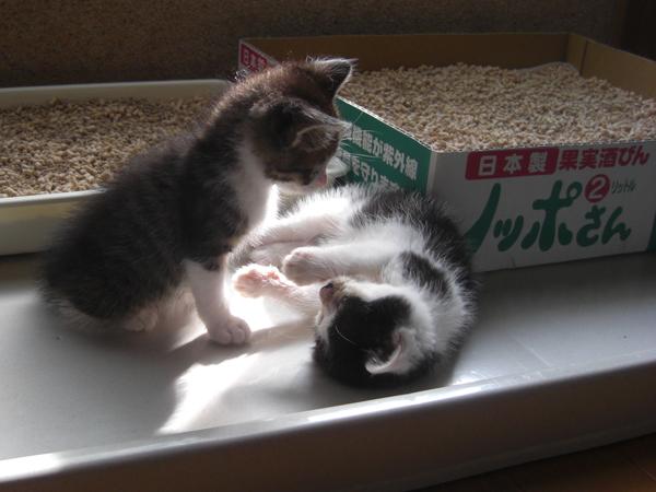 はるとニア 子猫時代