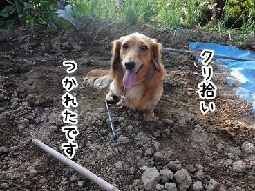kinako1003.jpg