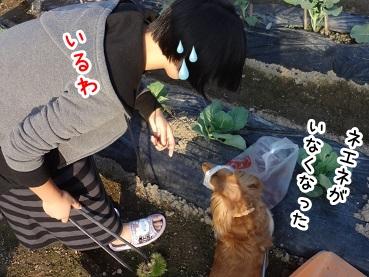 kinako1010.jpg