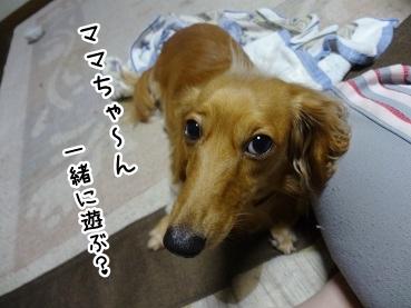 kinako1024.jpg