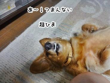 kinako1025.jpg