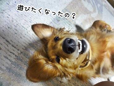 kinako1028.jpg