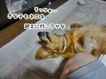 kinako1029.jpg