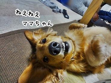 kinako1036.jpg