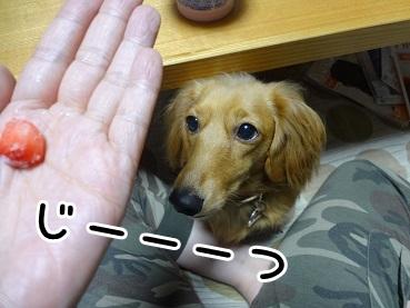 kinako1045.jpg