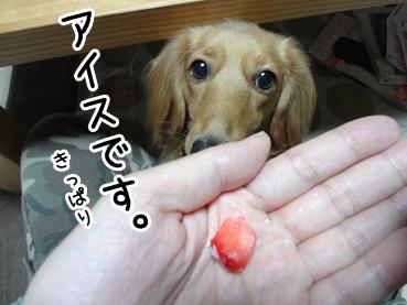 kinako1046.jpg