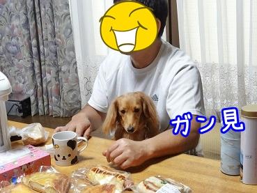 kinako1050.jpg