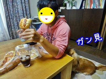 kinako1053.jpg