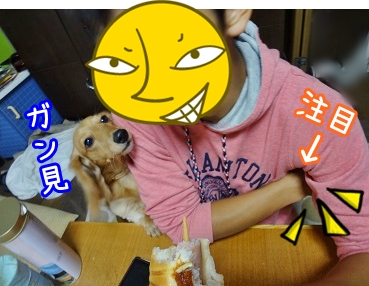 kinako1054.jpg