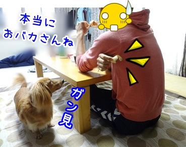 kinako1056.jpg