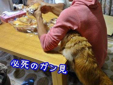 kinako1057.jpg