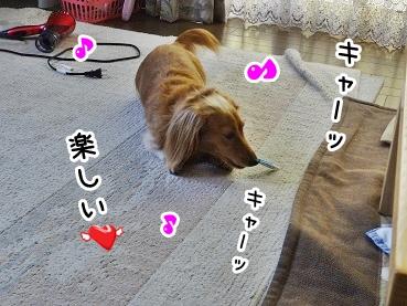 kinako1059.jpg