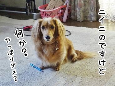kinako1060.jpg