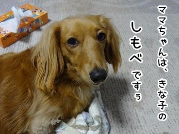 kinako1064.jpg