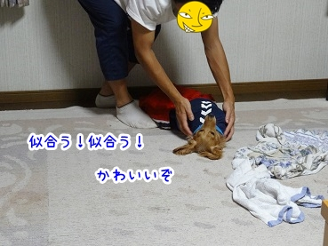 kinako919.jpg