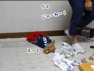 kinako920.jpg