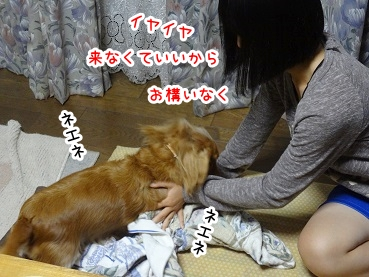 kinako923.jpg